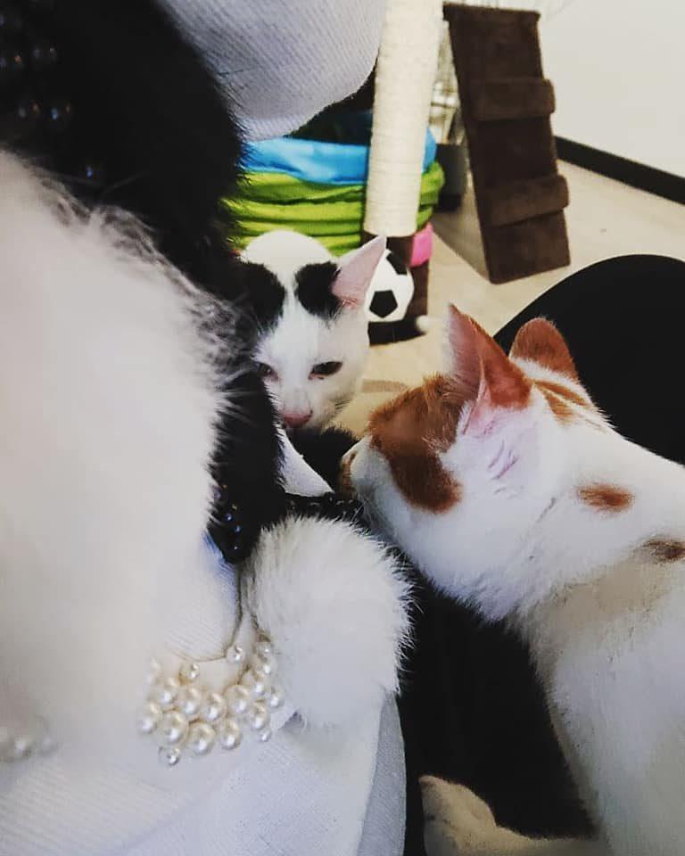 かわいい保護猫たち