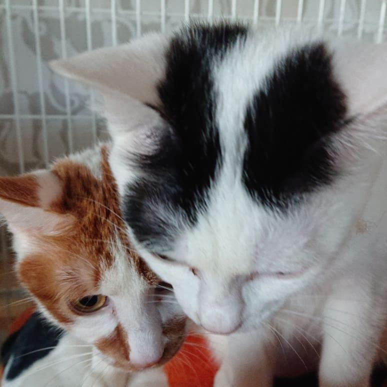 保護猫8ヶ月