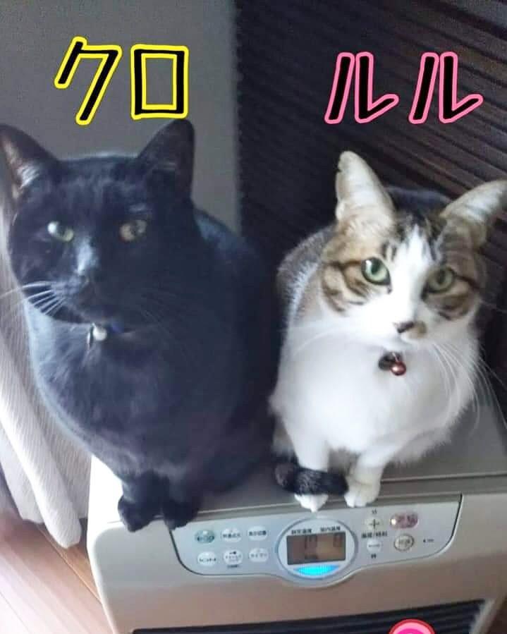 保護猫クロとルル