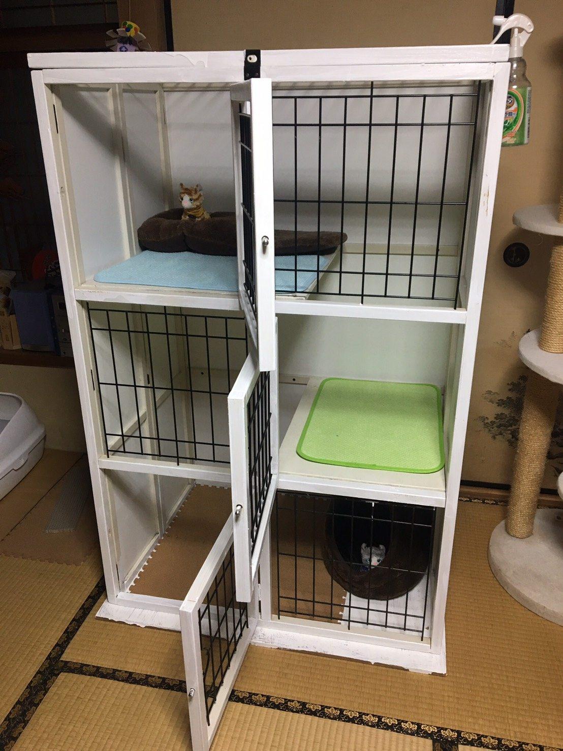 保護猫クロ&ルルの新しいお家
