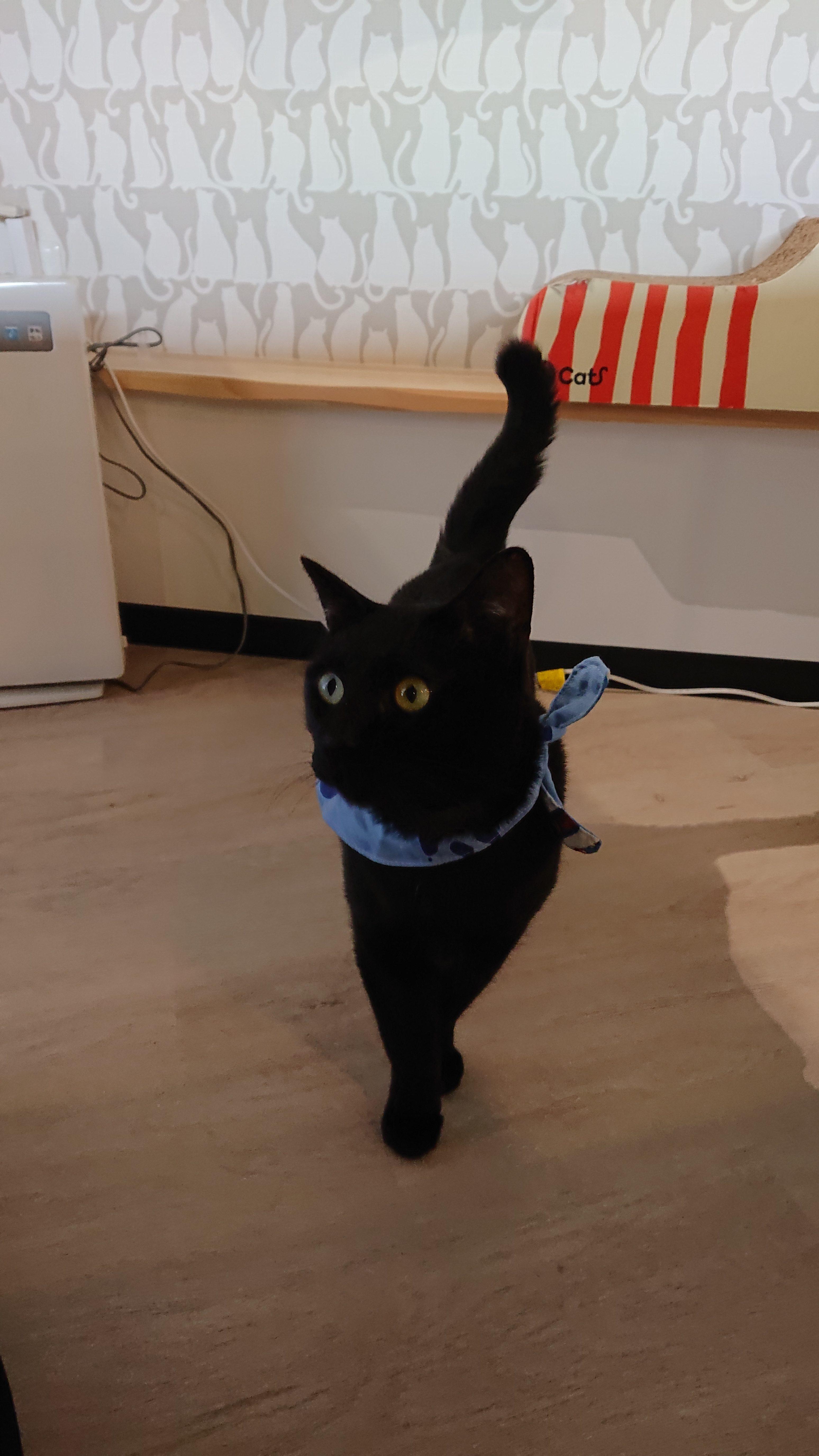 保護猫クロ