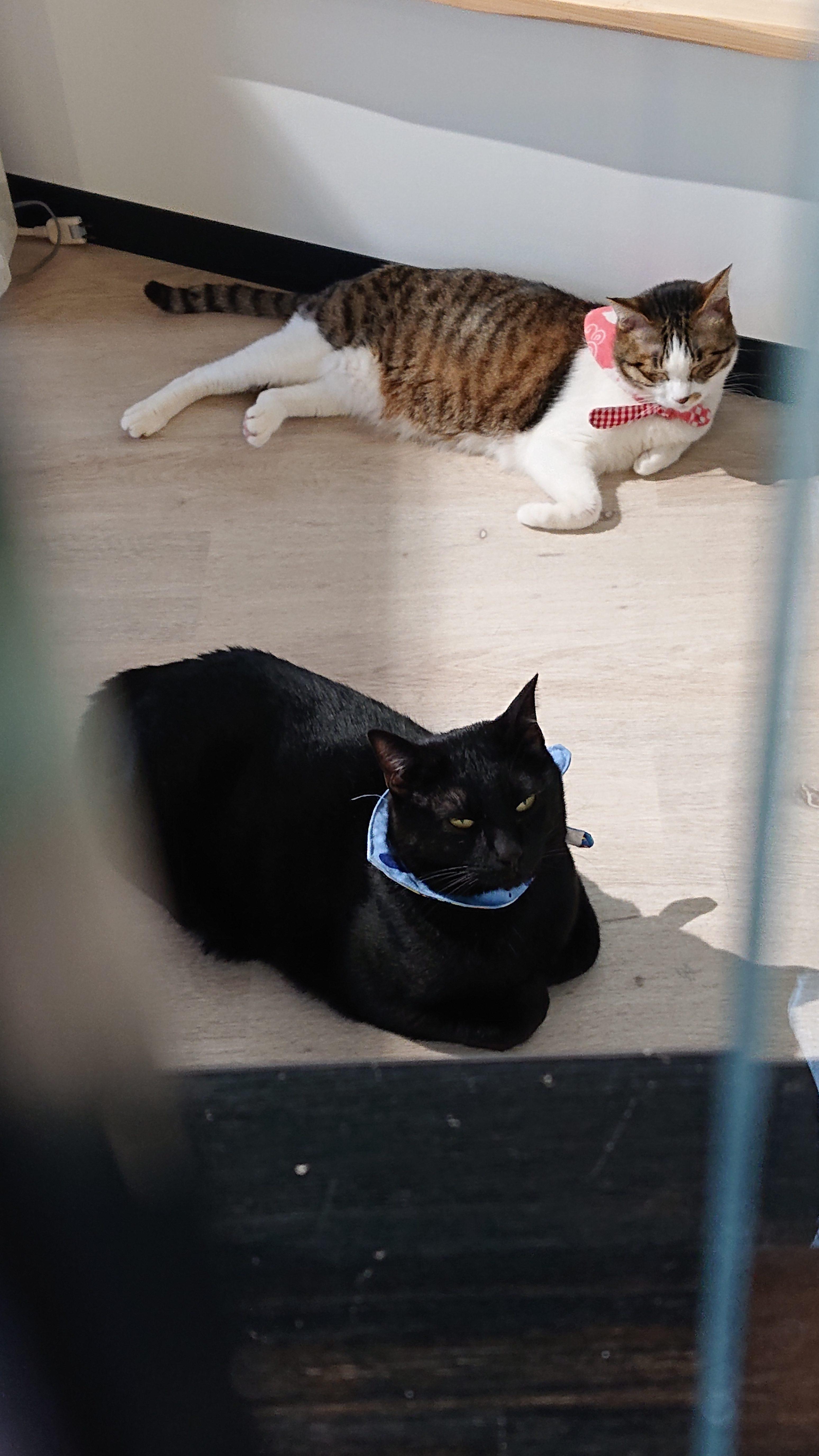 保護猫クロ&ルル