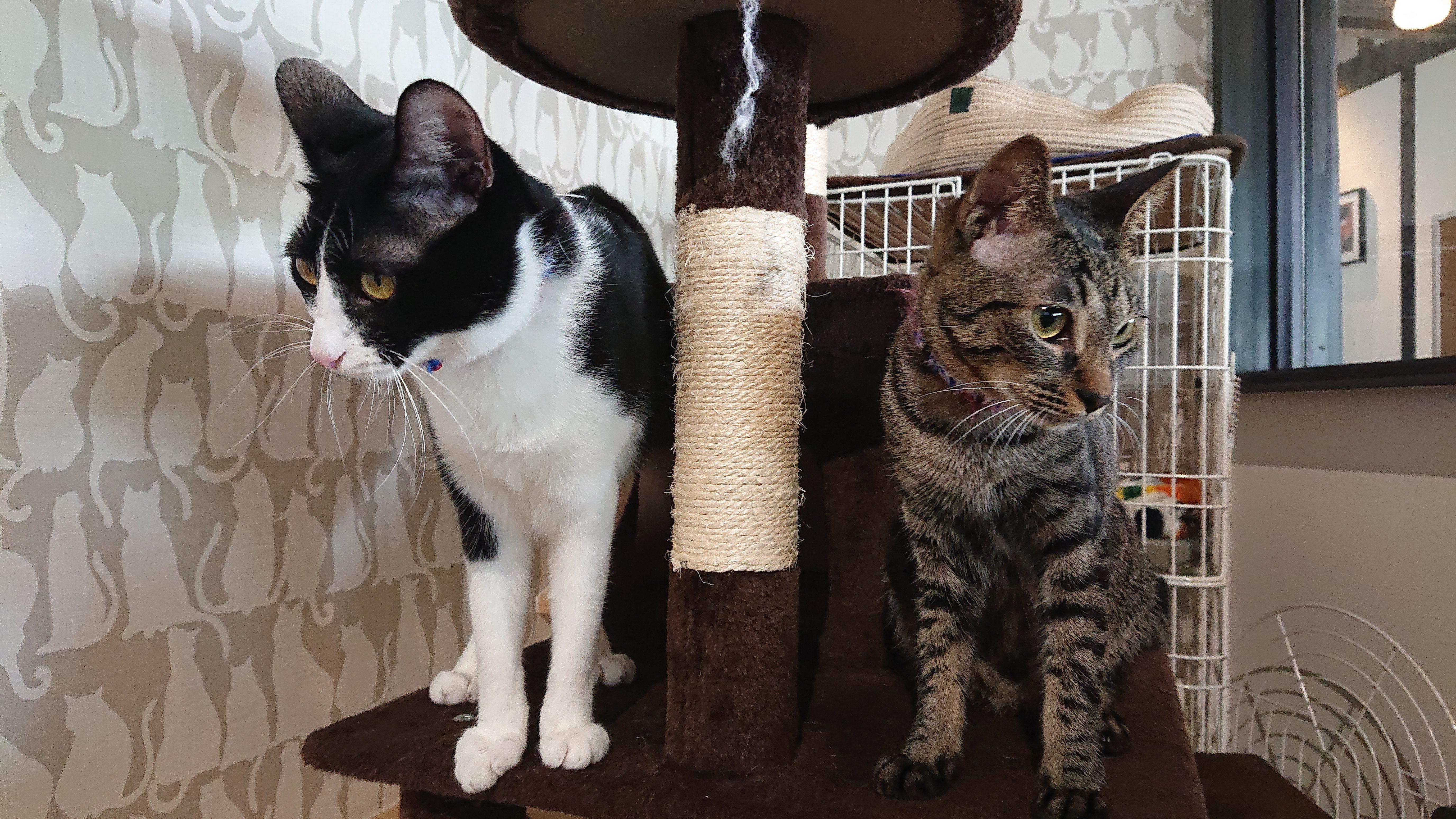 里親募集中の保護猫