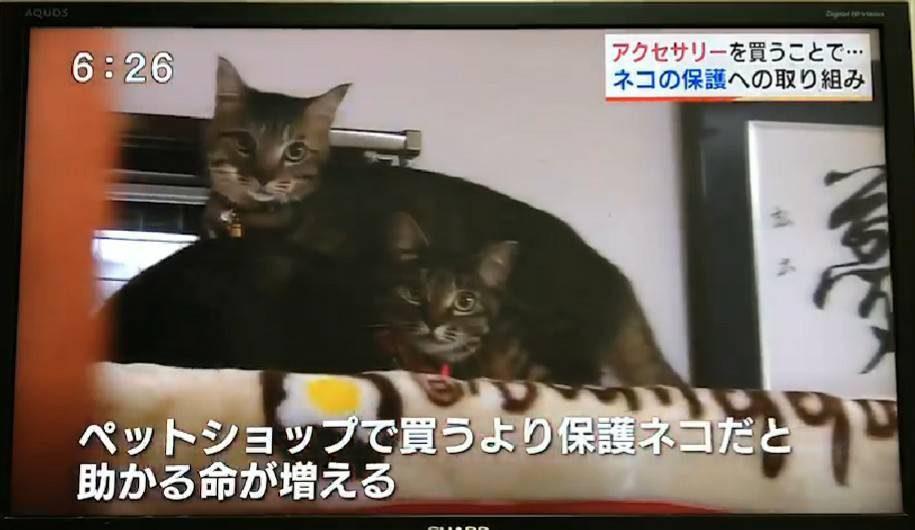 RKK夕方ゲツキン!メディア紹介