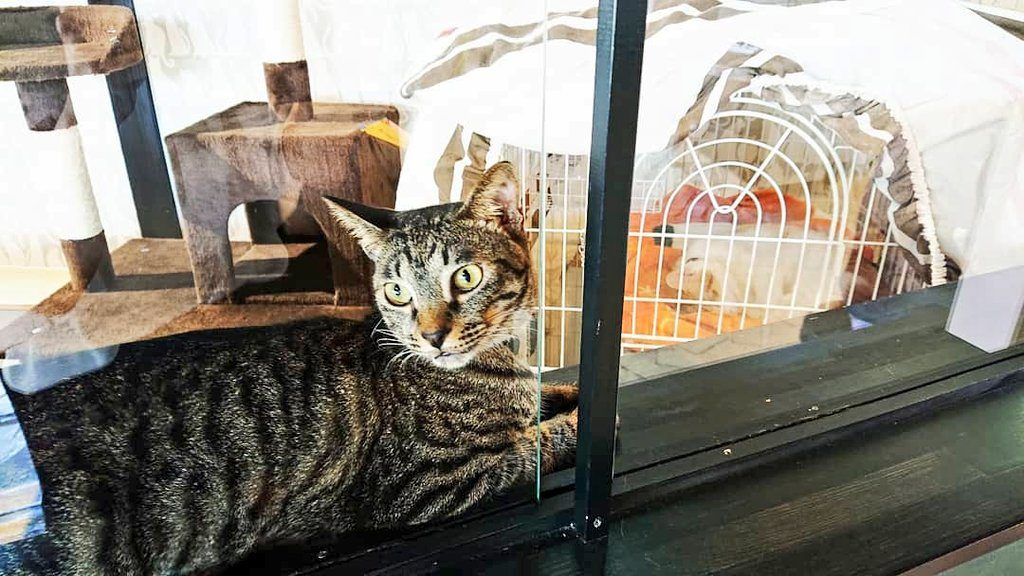 cattonの保護猫