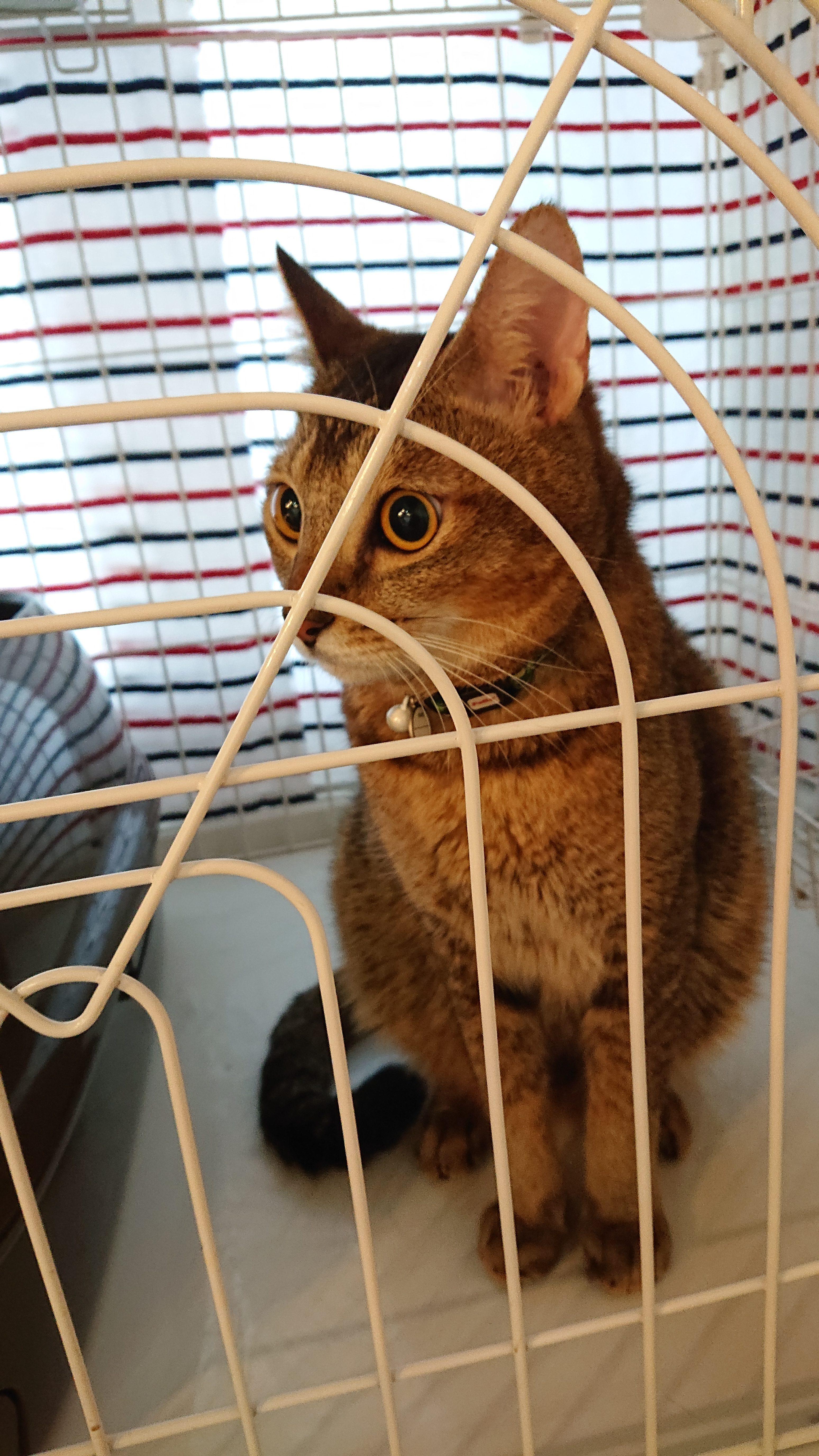 保護猫ちゃちゃ