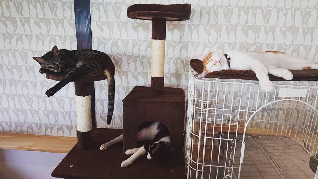 保護猫たちの昼寝