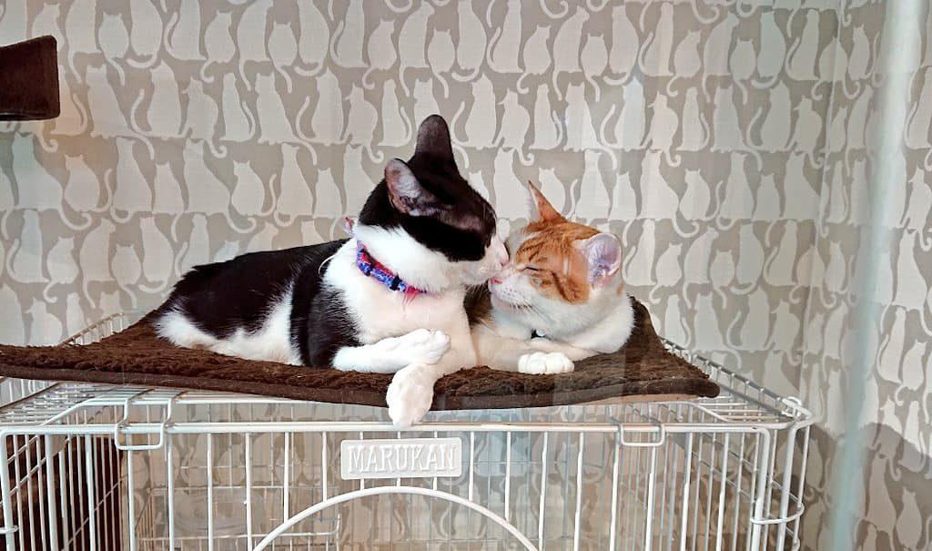 仲良し保護猫