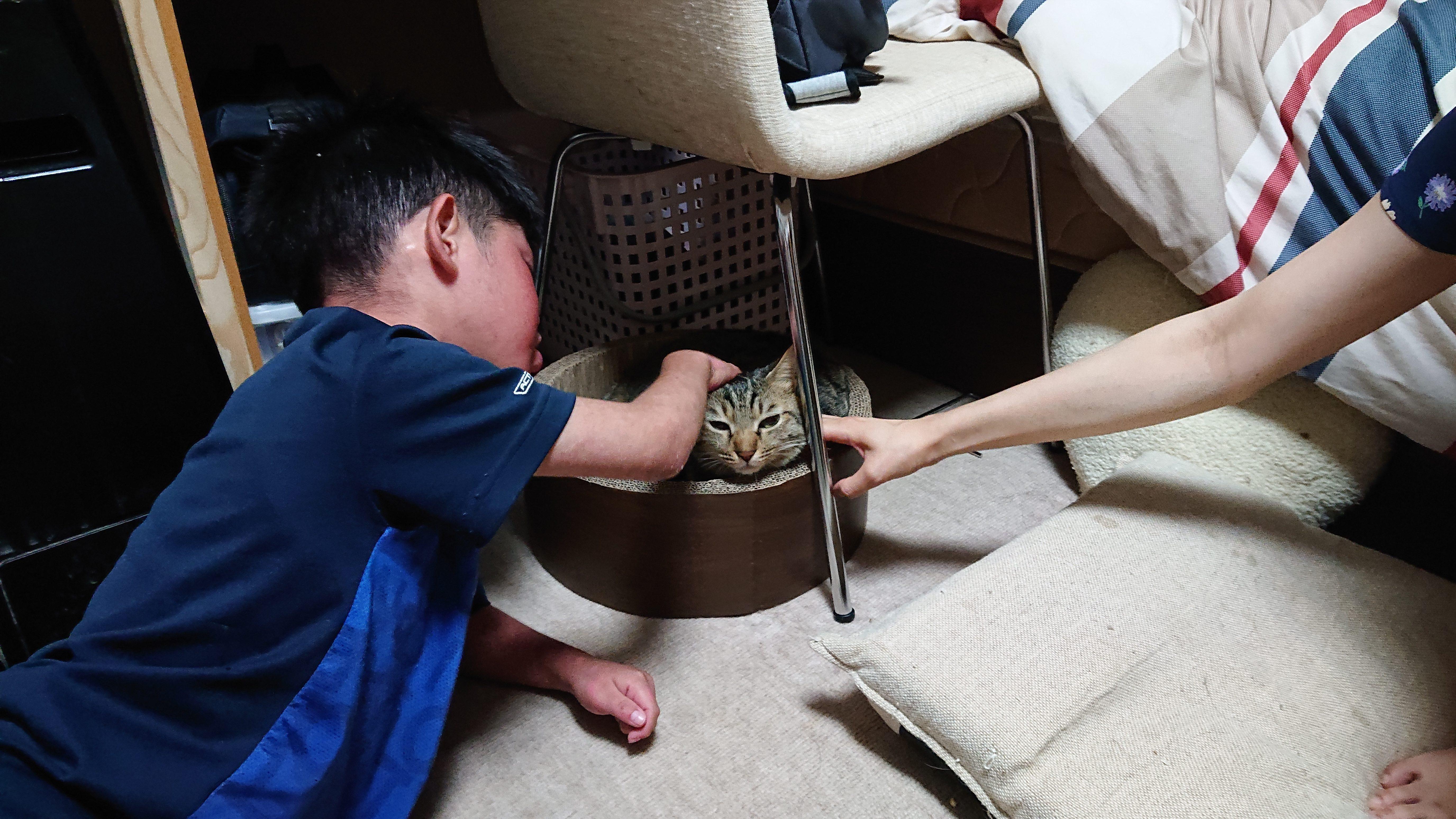 元保護猫ゴワくんの幸せな暮らし