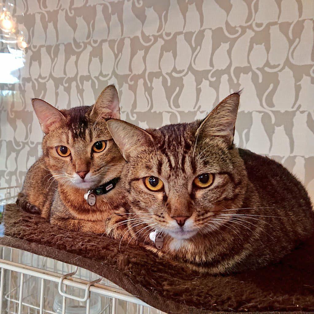保護猫マミー&ちゃちゃ