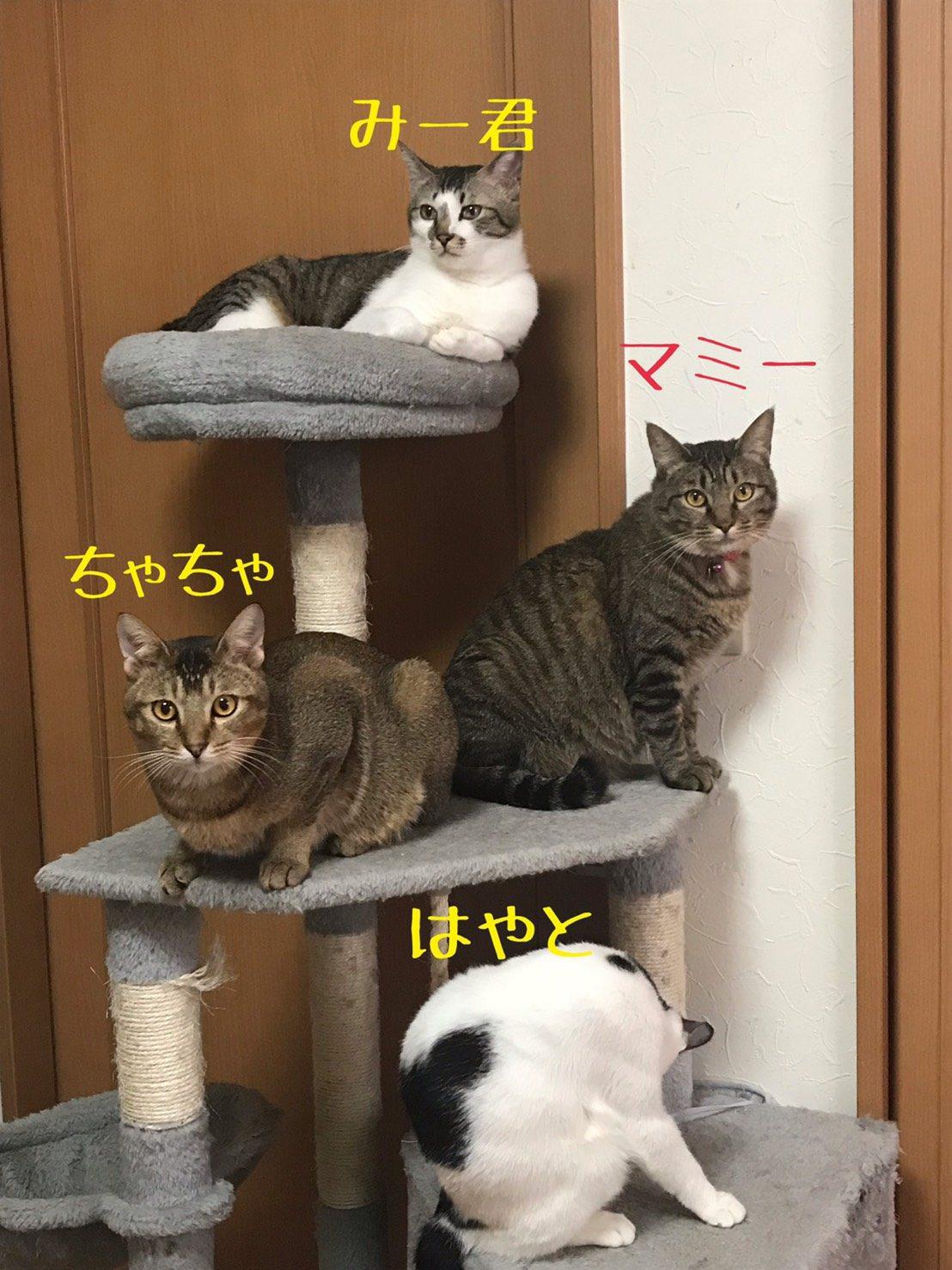 ゆかいな保護猫たち