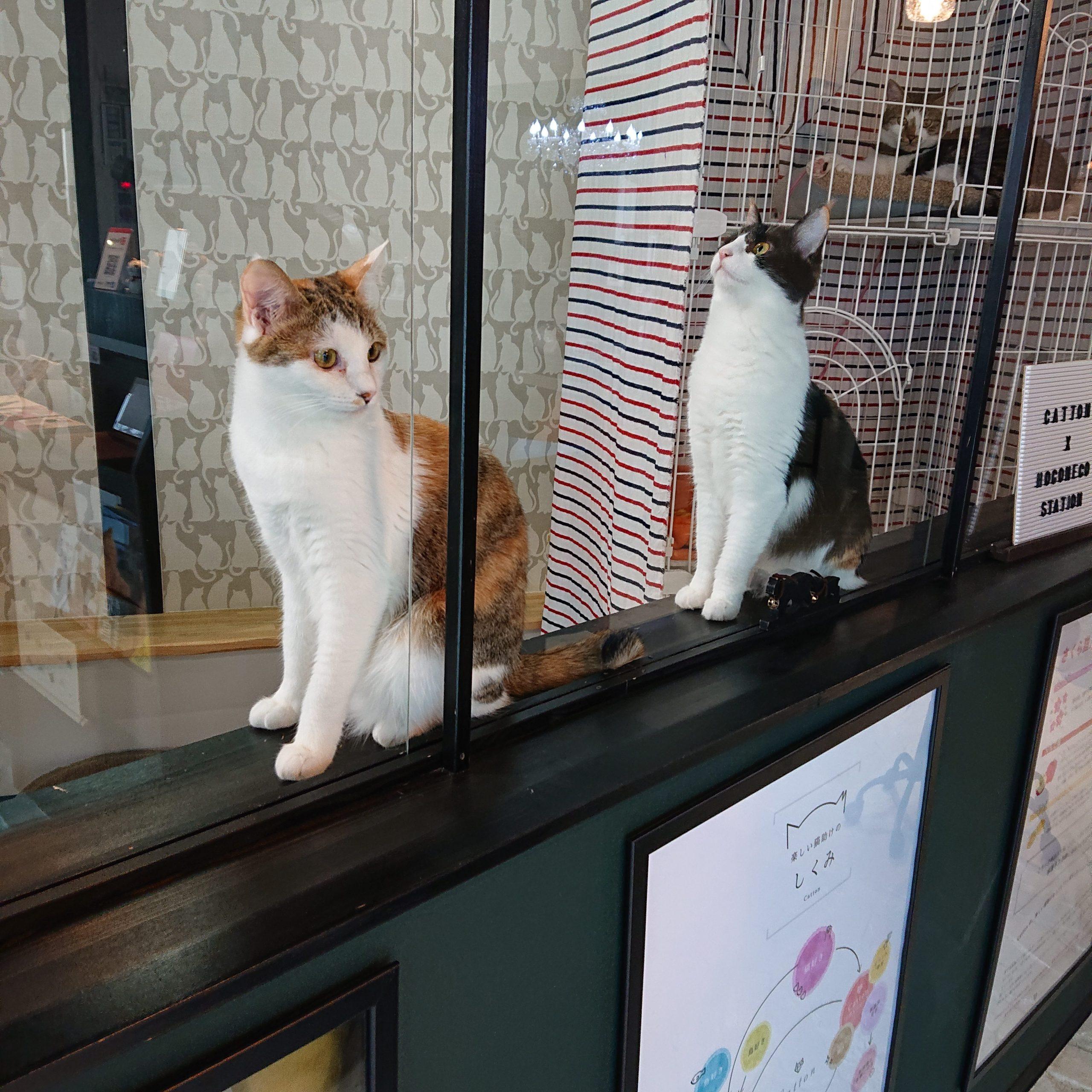保護猫ニコモコ