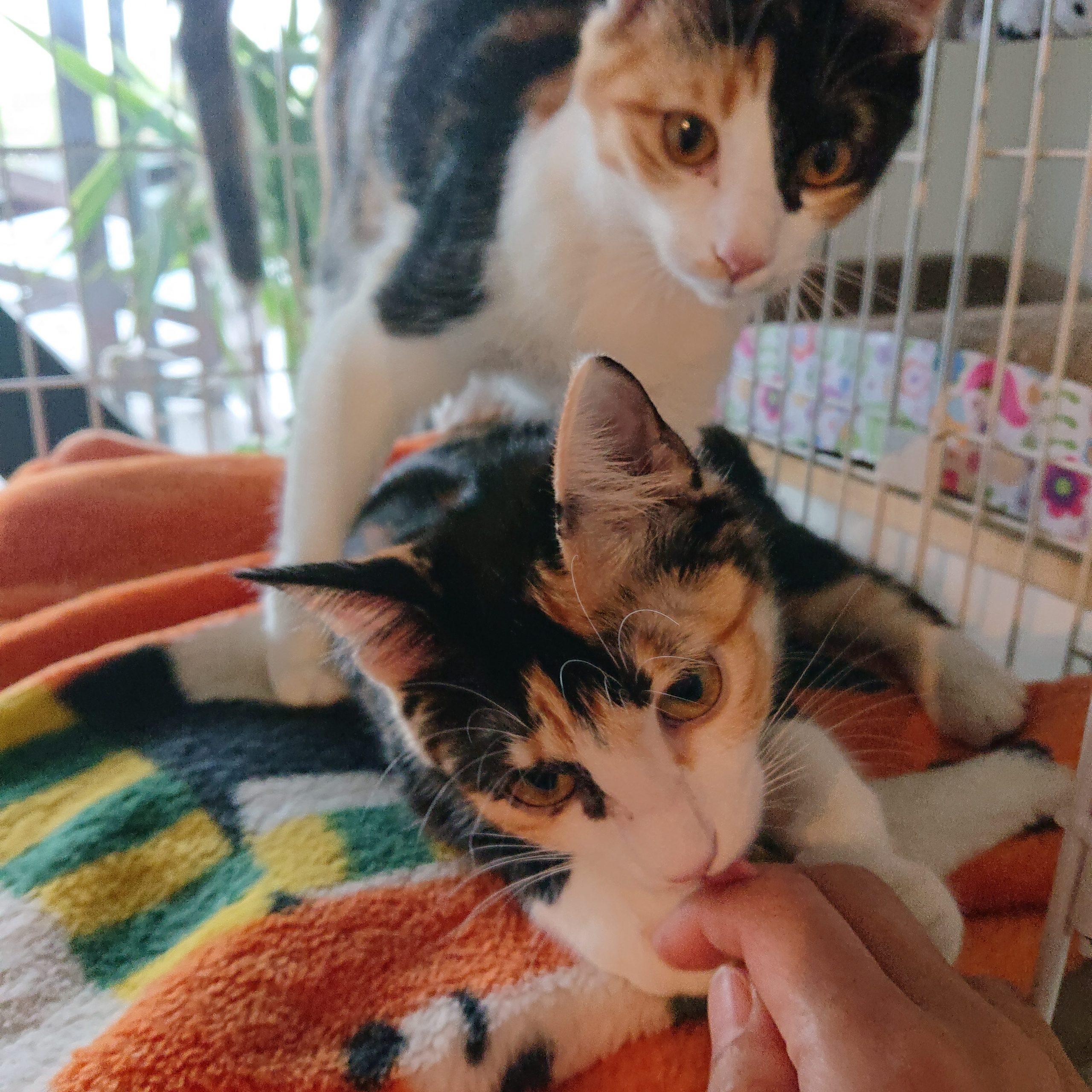 保護猫ちーちゃんしーちゃん