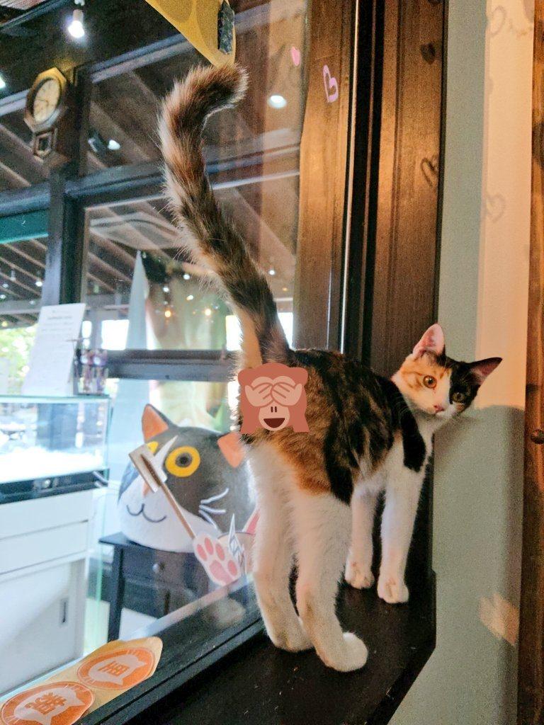 保護猫ちー