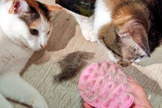猫の換毛期
