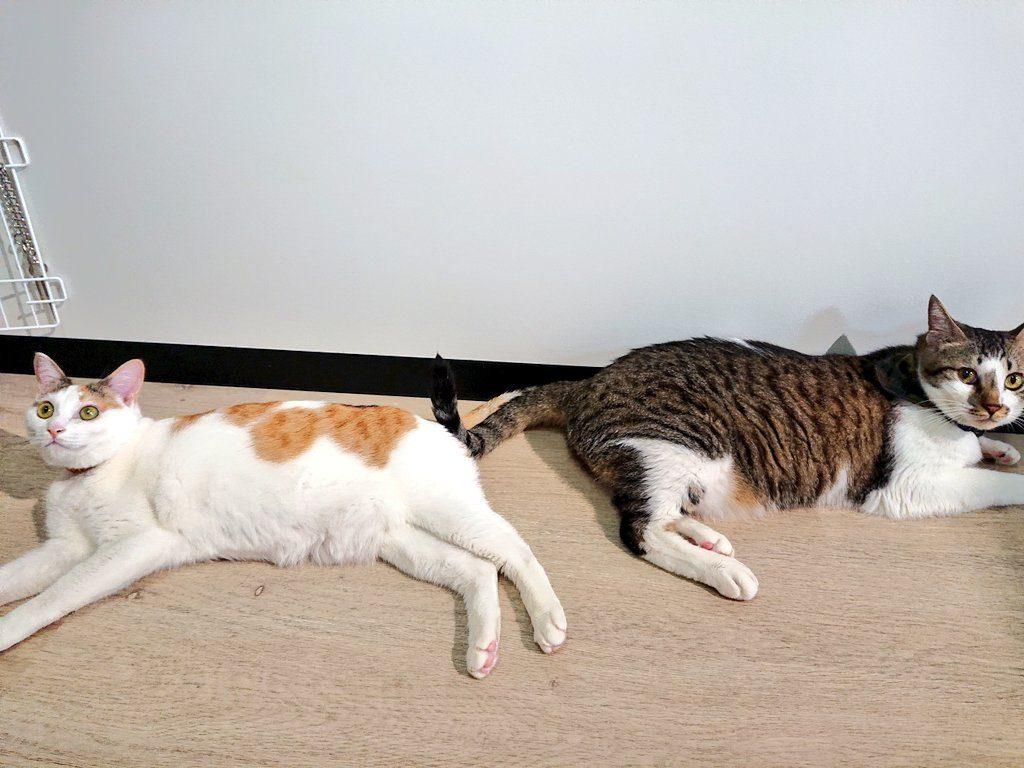 保護猫みーくんあいちゃん