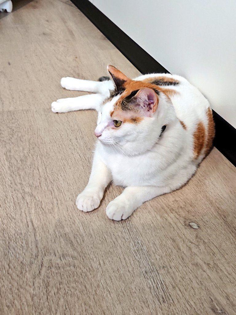 保護猫あい