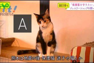 メディア紹介‐てれビタ