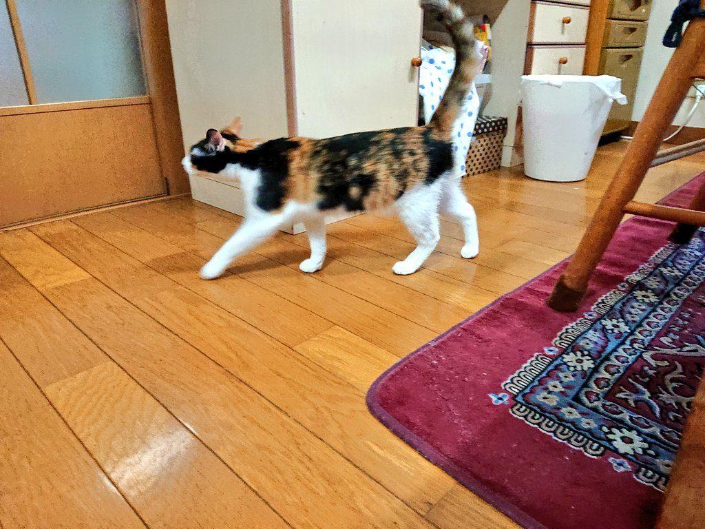 保護猫ちーちゃん&しーちゃん