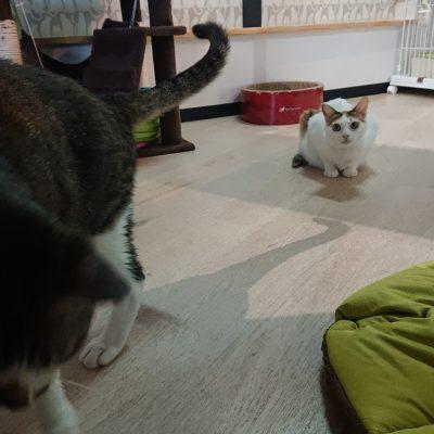 保護猫あいちゃん