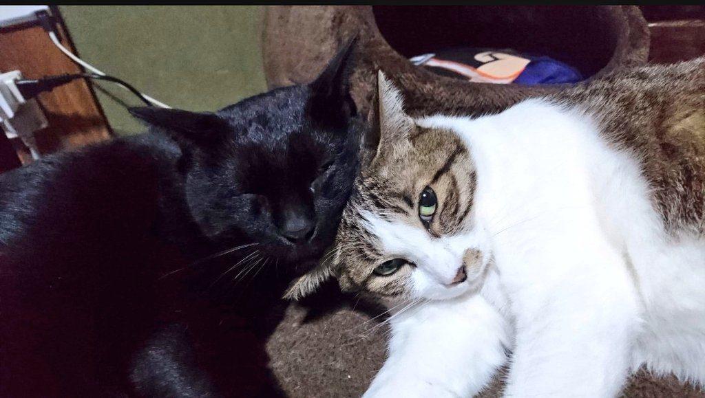 元保護猫幸せ便り
