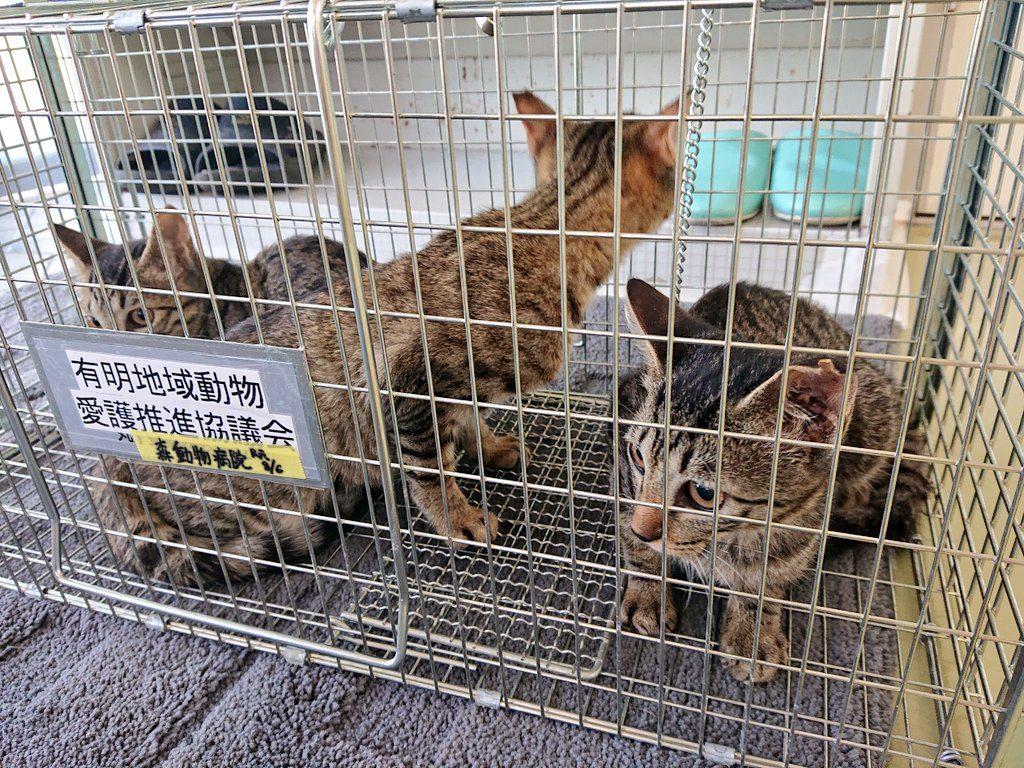 さくら猫地域猫