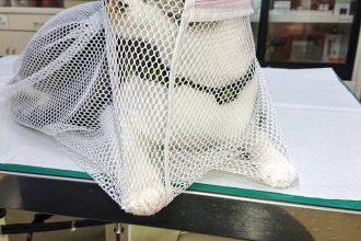 保護猫ワクチン接種