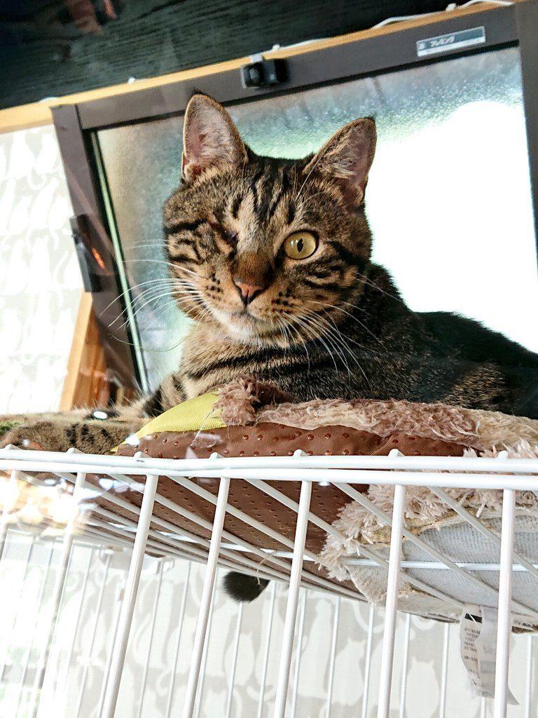 Cattonの保護猫たち