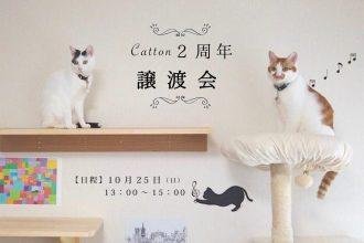 Catton譲渡会