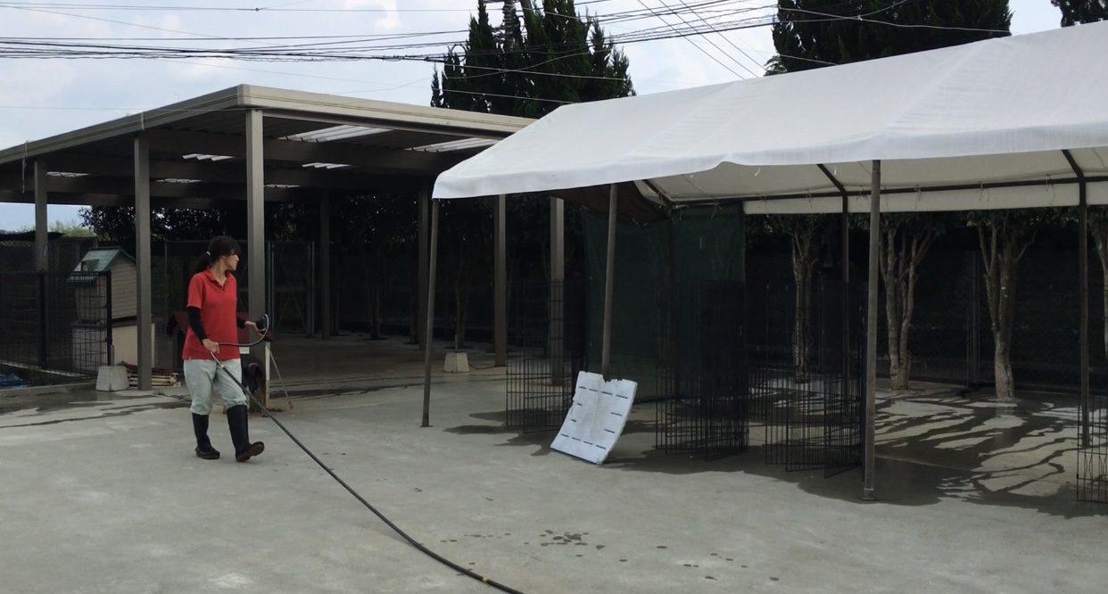 熊本県動物愛護センターの様子