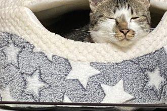 元保護猫みーくん