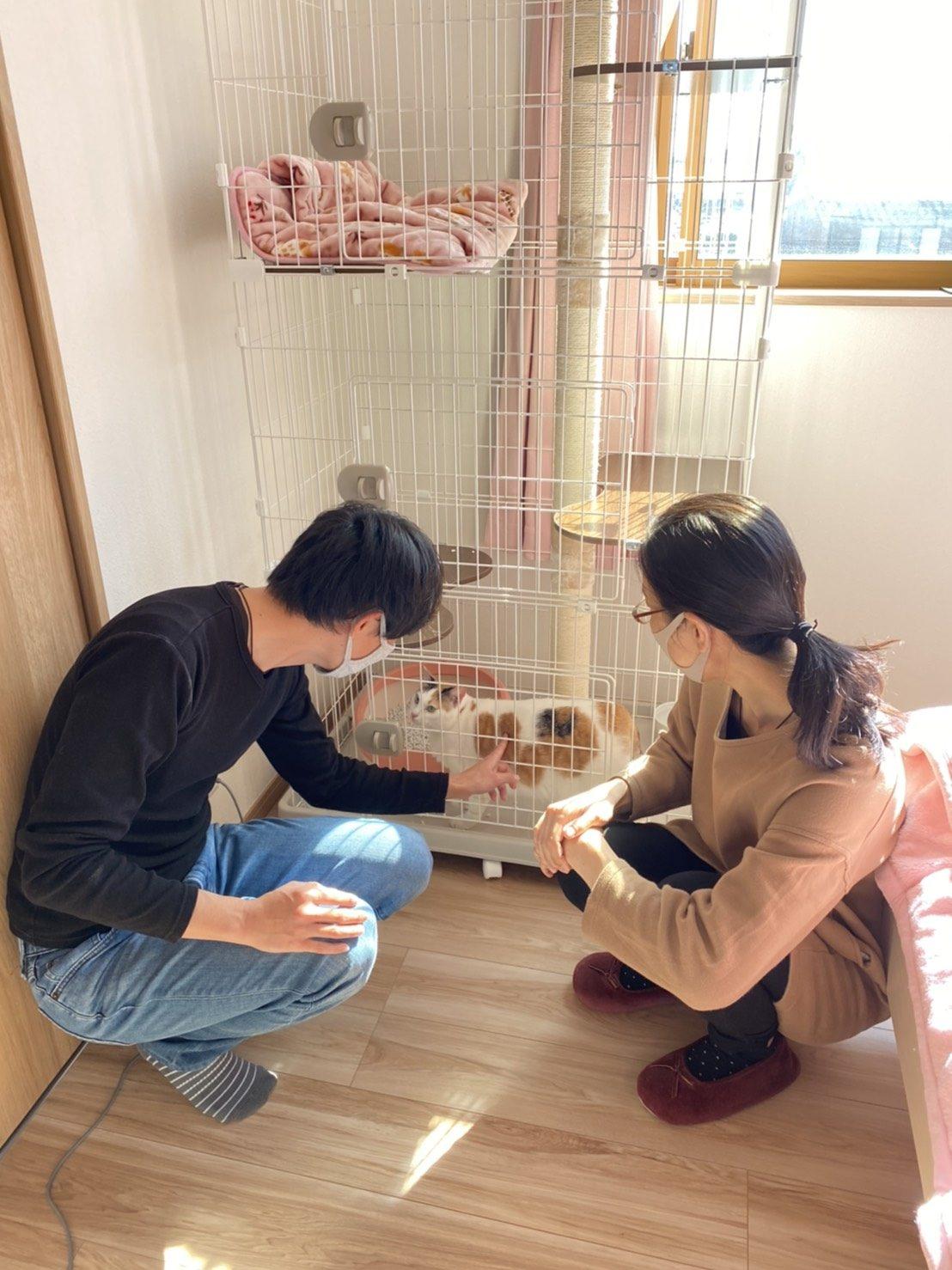 保護猫愛ちゃん卒業