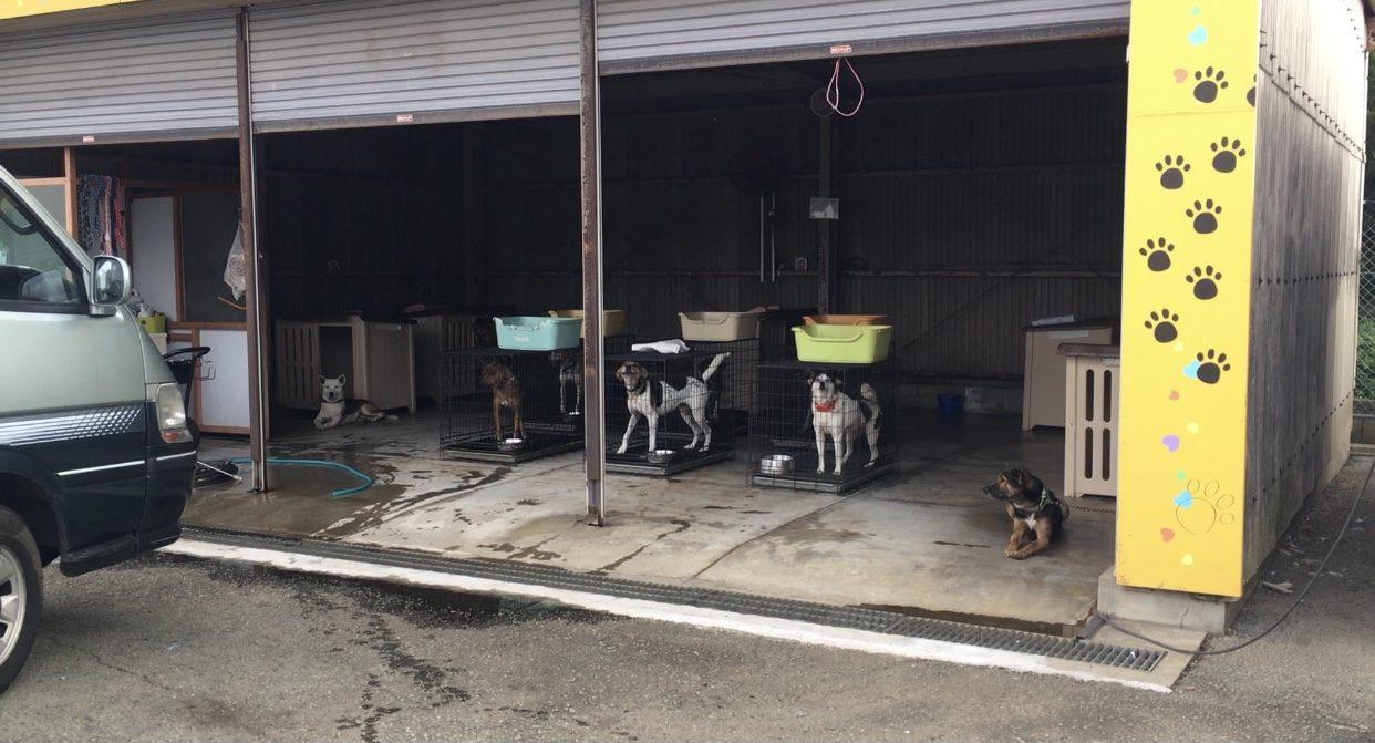熊本県動物愛護センター 保護犬の様子