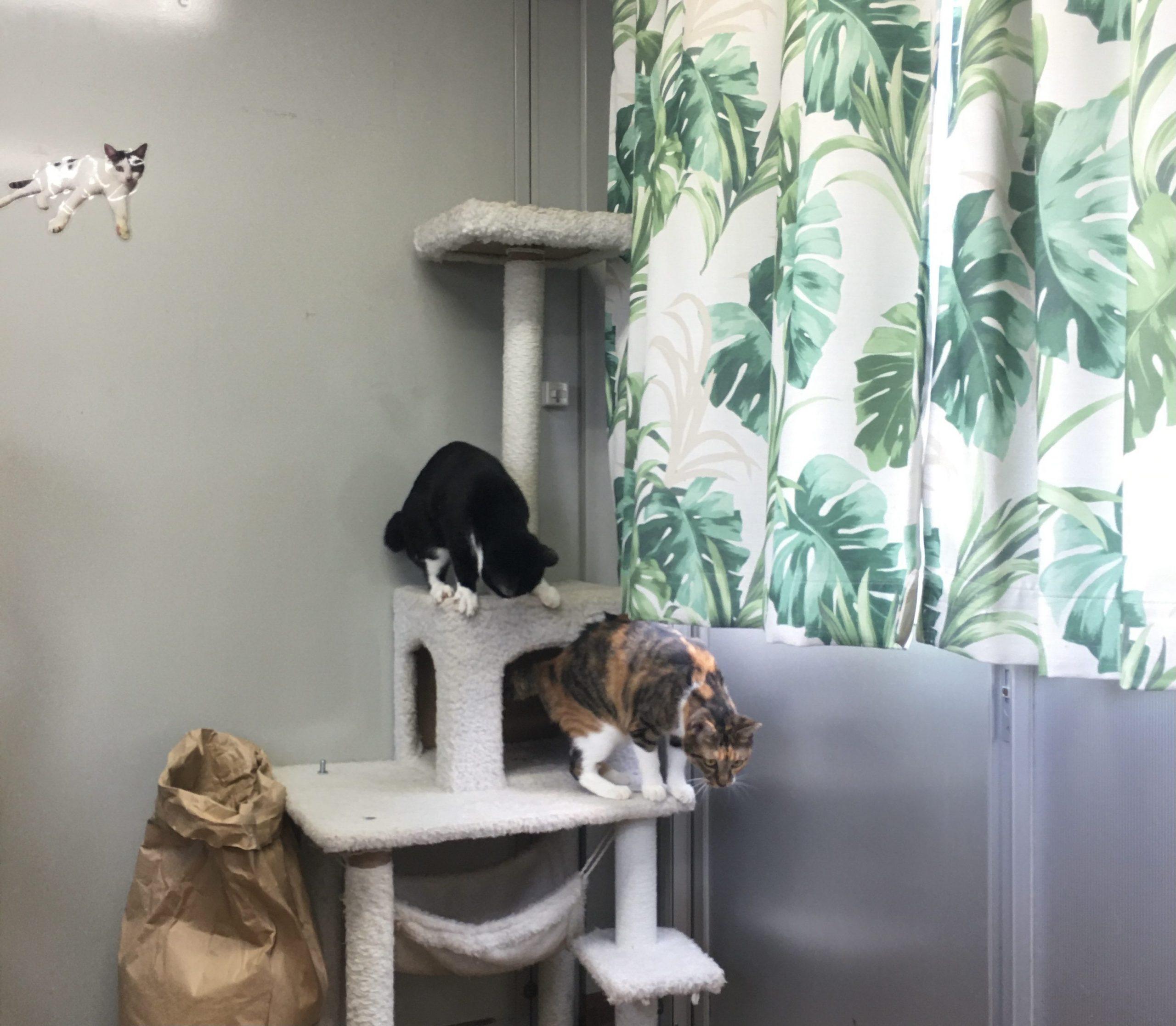 熊本県動物愛護センター キャットタワーと猫