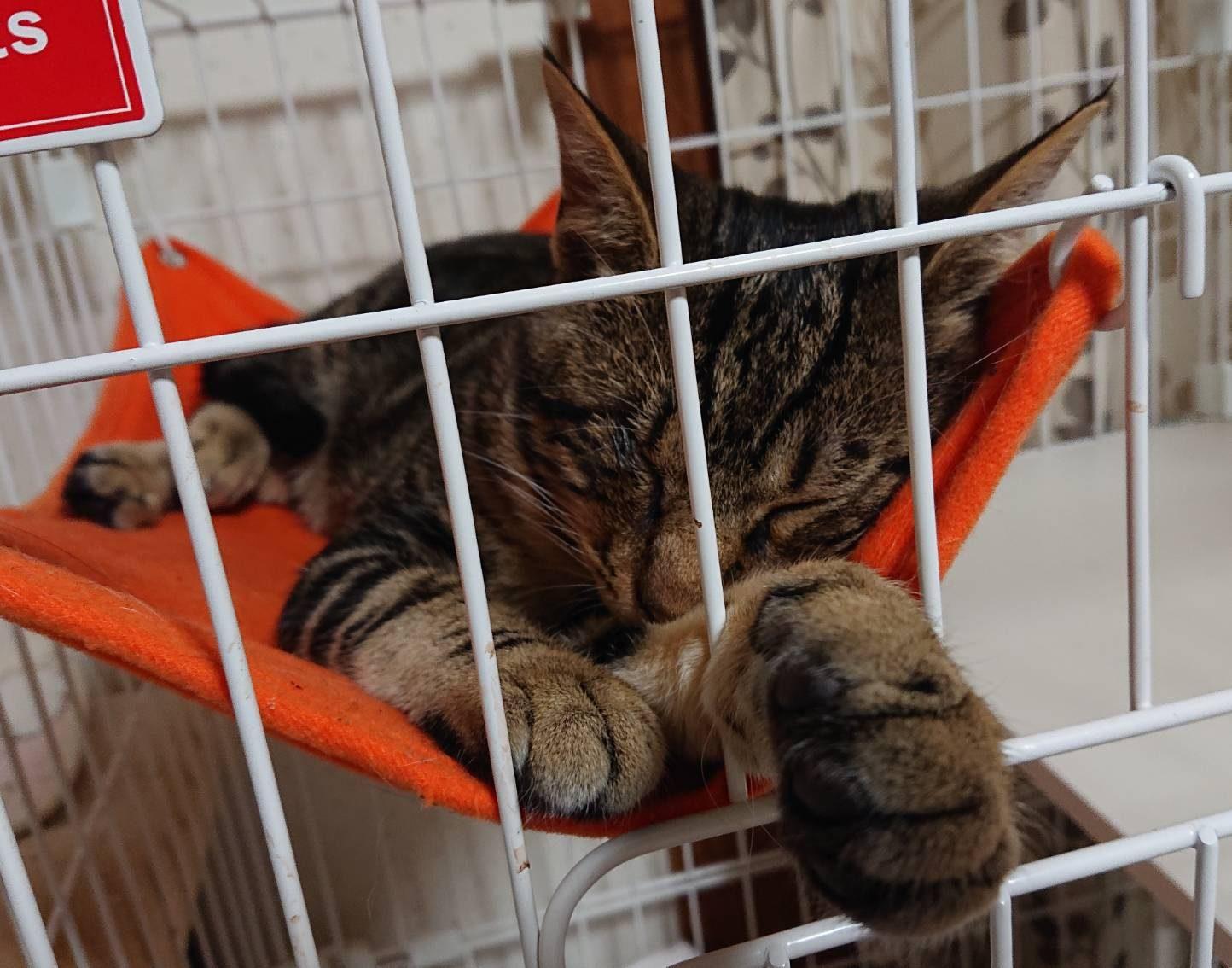 保護猫しんくん保護当時