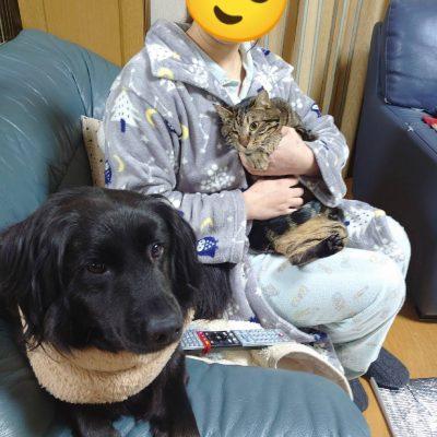 保護猫しんくん