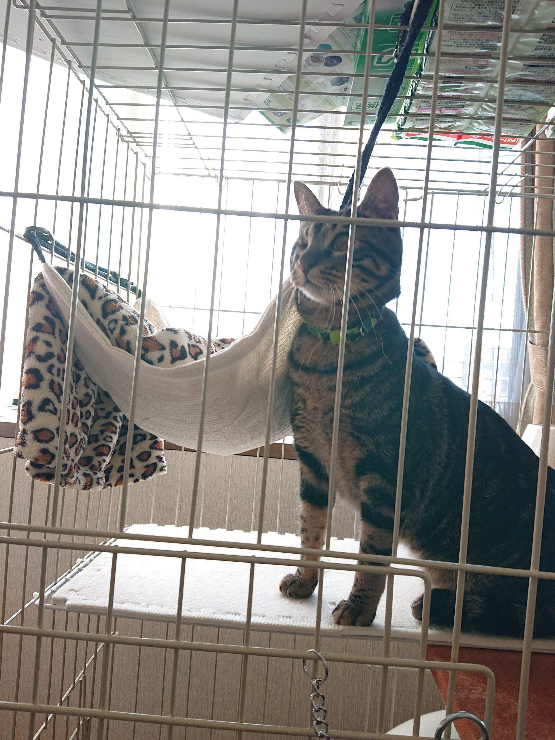 保護猫しんくん卒業