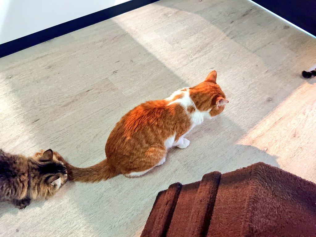 保護猫セン