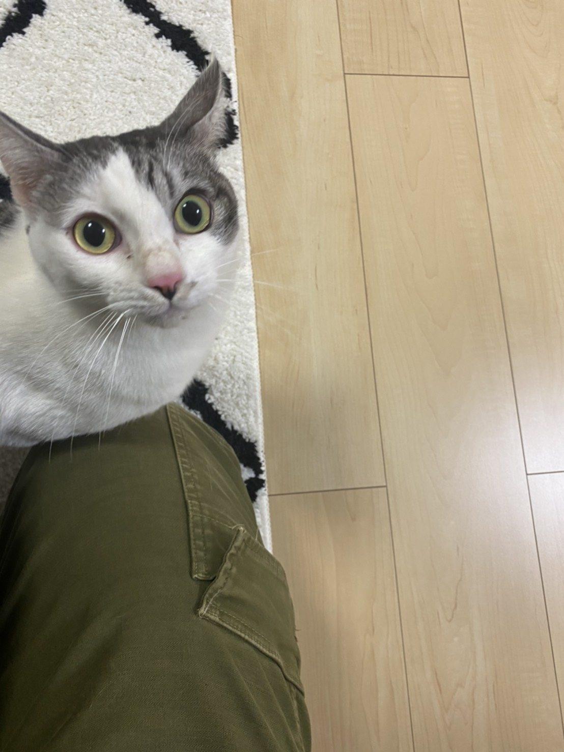 トライアル初日の元保護猫えだまめ(里親さんのお宅にて)