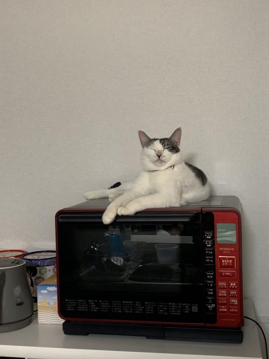 レンジの上でくつろぐ元保護猫えだまめ(里親さんのお宅にて)