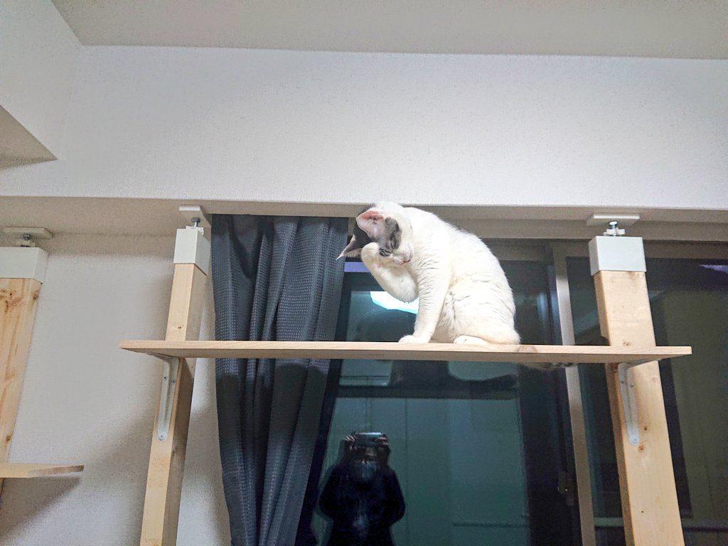 元保護猫えだまめ