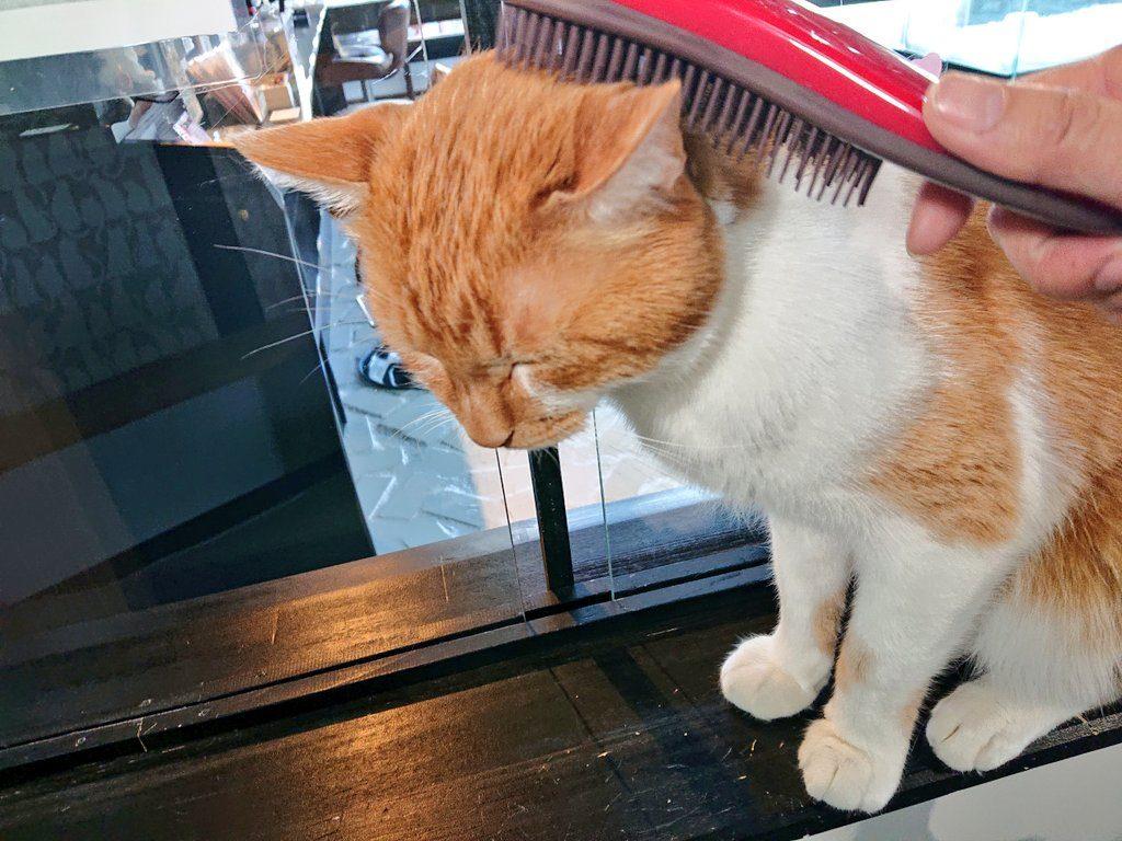 ブラッシング気持ちいい保護猫せん