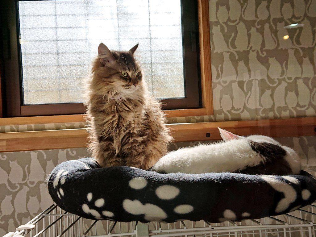 最後の日を過ごすCattonの保護猫