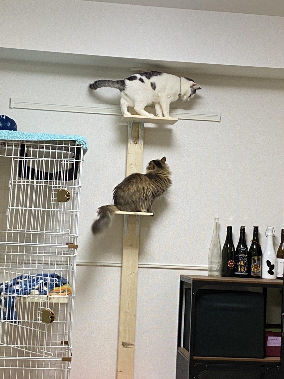 元保護猫えだまめ&もふ