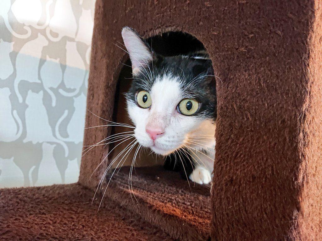 多頭崩壊レスキュー保護猫カツくん