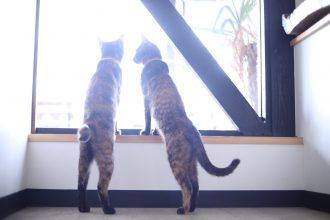 保護猫(サビ猫の姉妹)