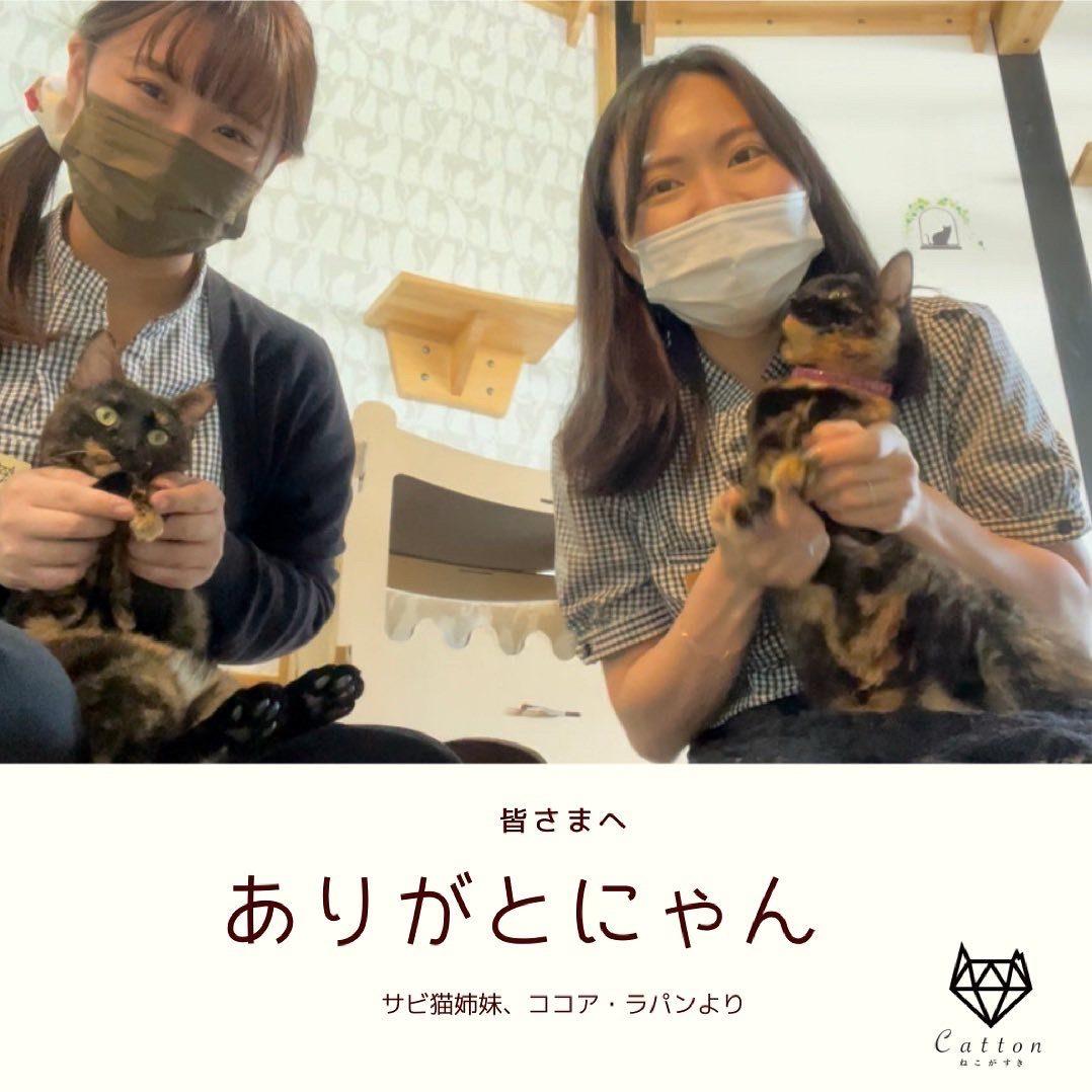 保護猫(サビ猫)
