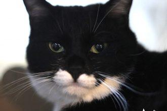 保護猫(白黒猫)