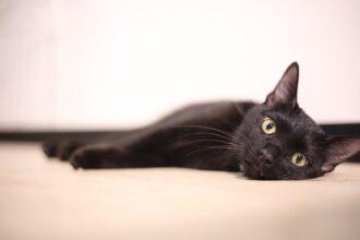 保護猫(黒猫)
