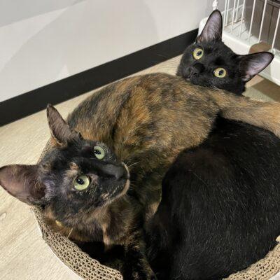 保護猫(サビ猫・黒猫)
